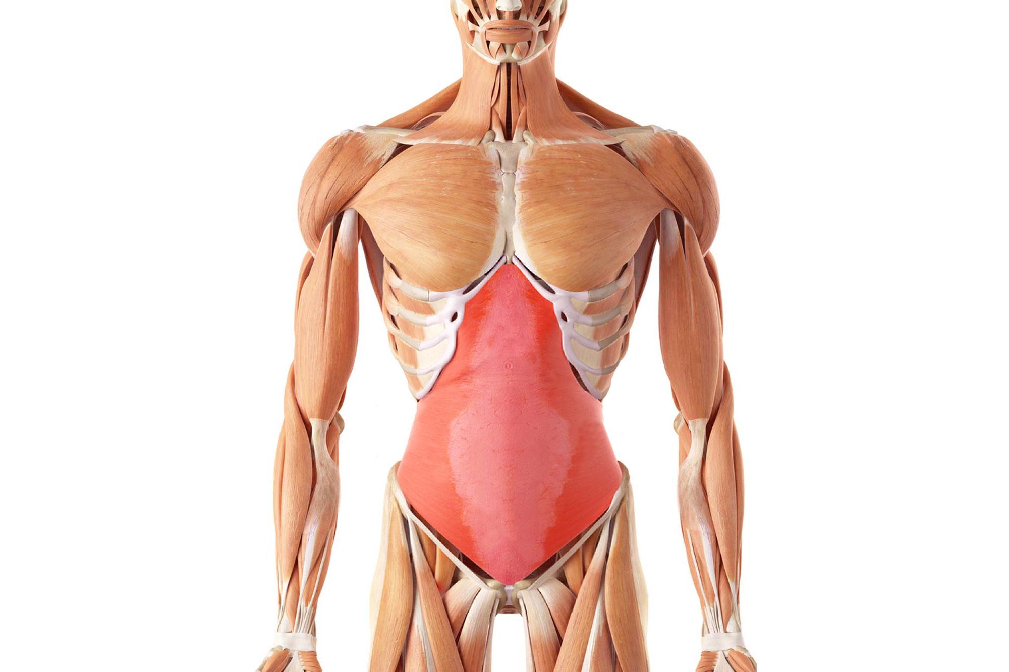 Поперечные абдоминальные мышцы