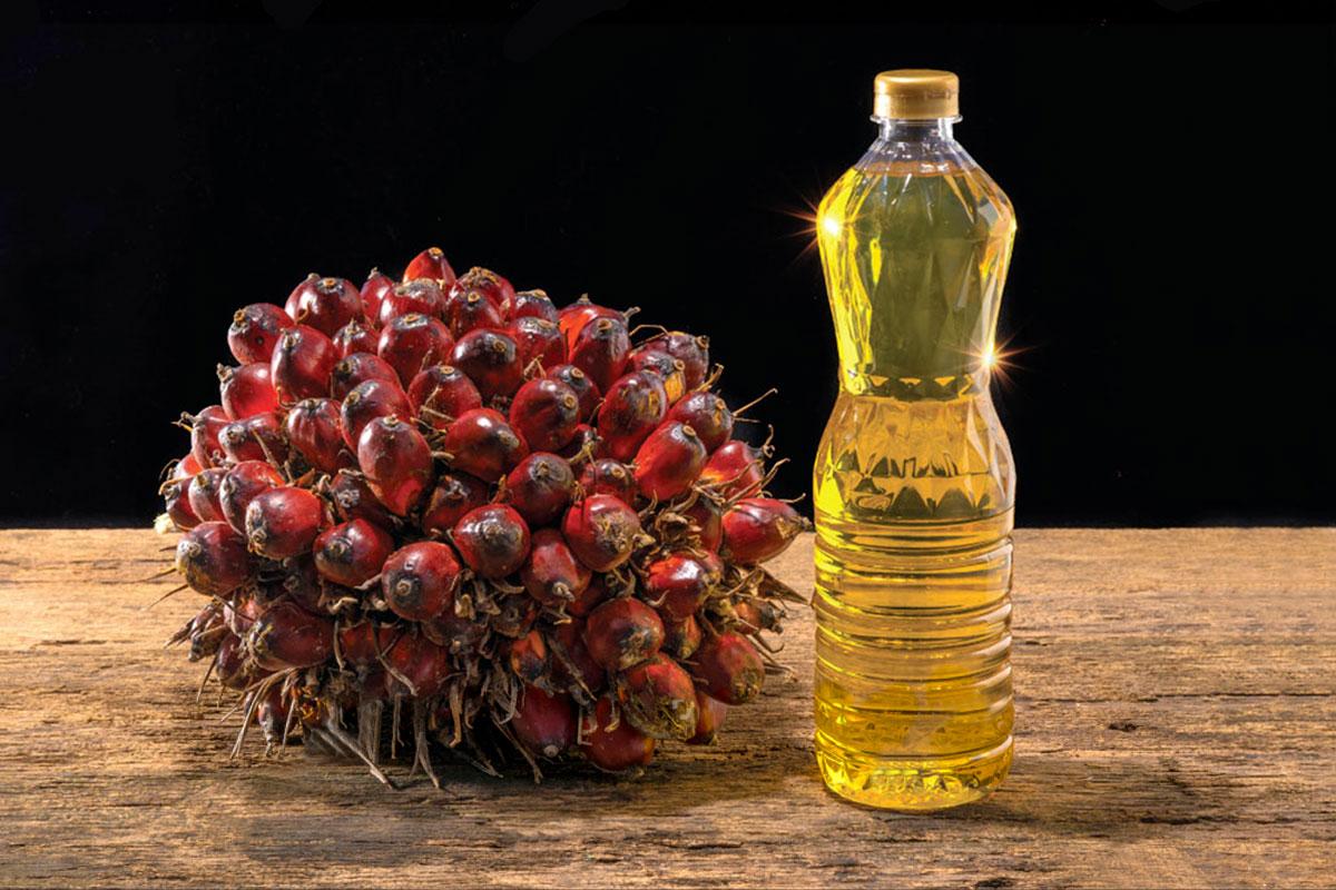 Что такое пальмовое масло?