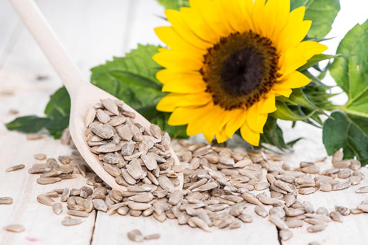 Цинкосодержащие продукты —семена подсолнечника