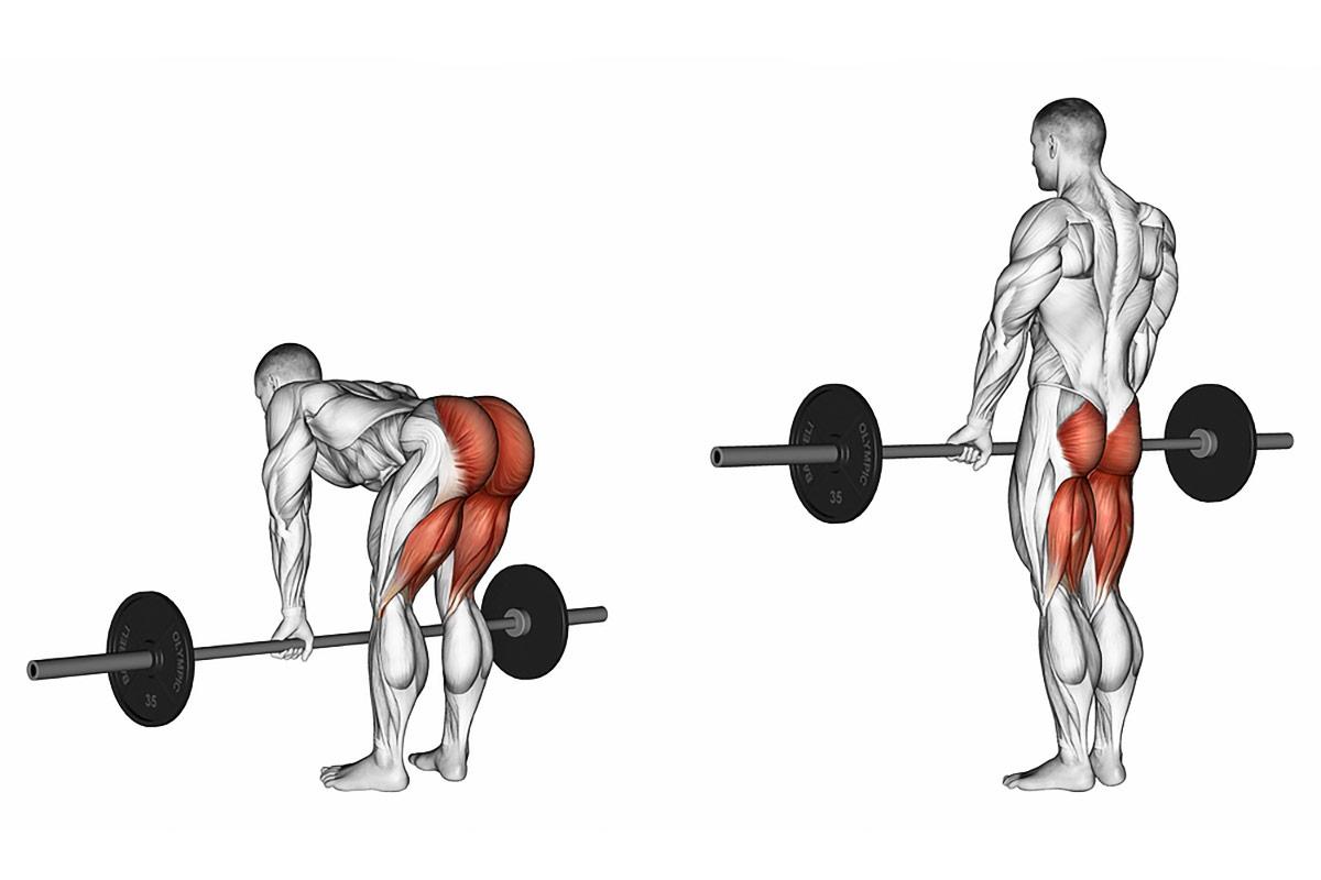 Становая тяга —какие мышцы работают?