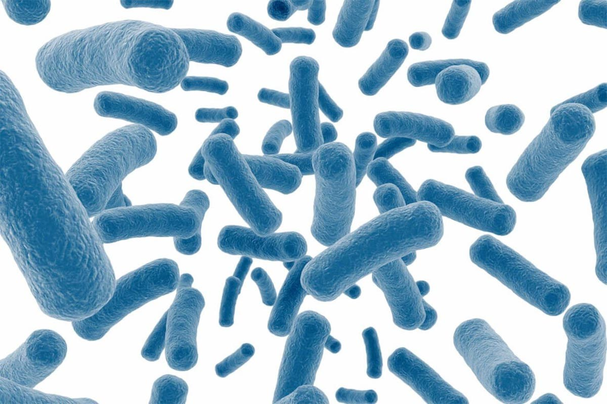 Пробиотики —что это такое?