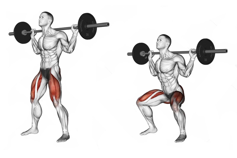 Приседания со штангой —какие мышцы работают?