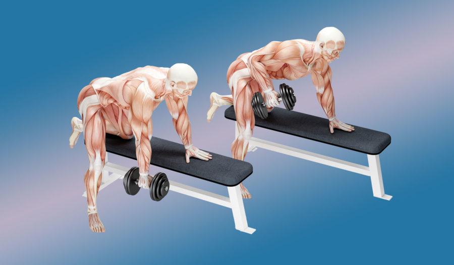 Тяга гантели в наклоне —биомеханика упражнения