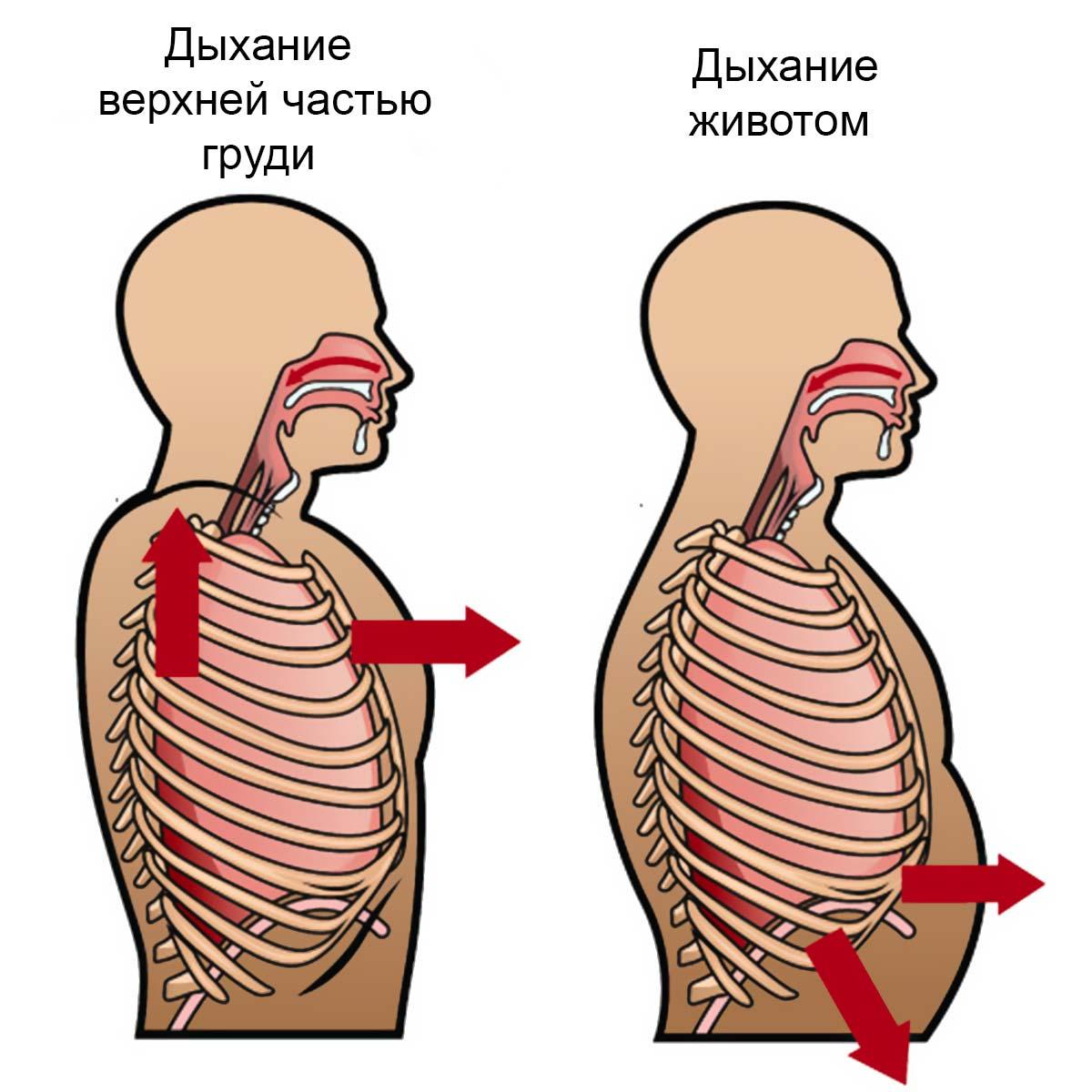 Дыхание животом и грудью