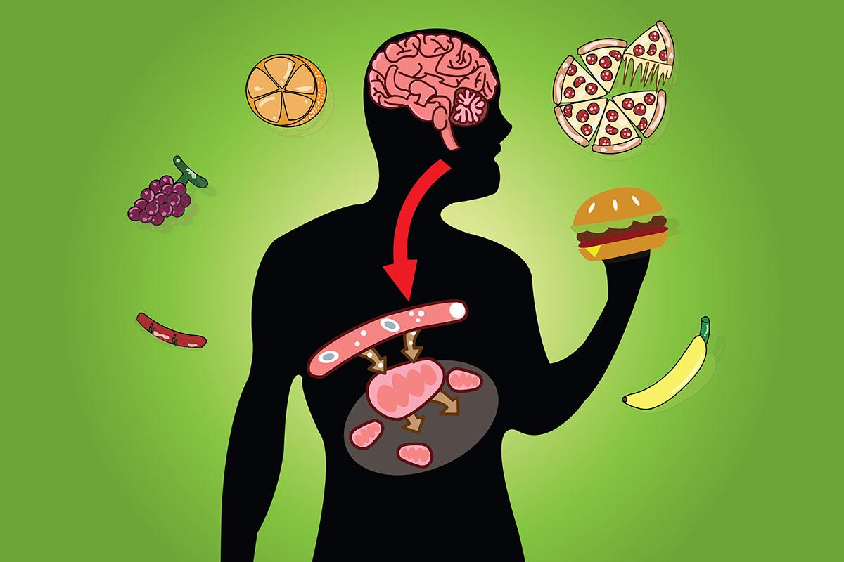 Что такое метаболизм?