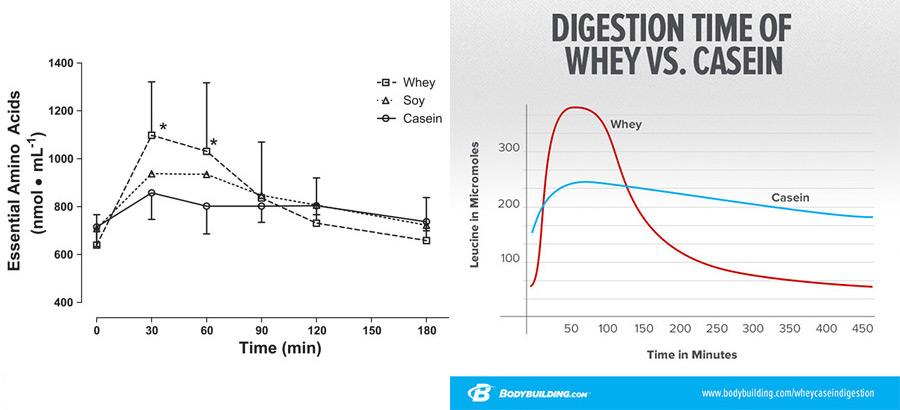 Сравнение казеина с обычным протеином