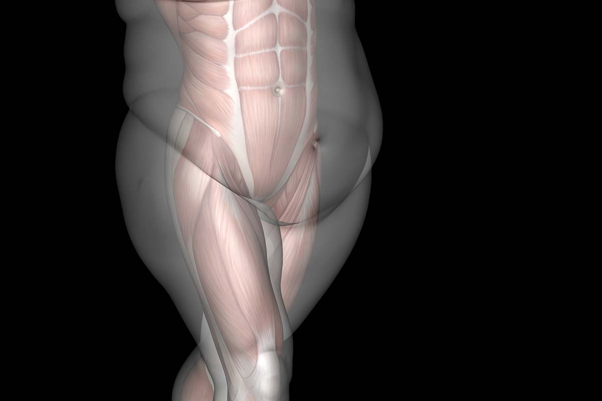 Внутренний (висцеральный) жир